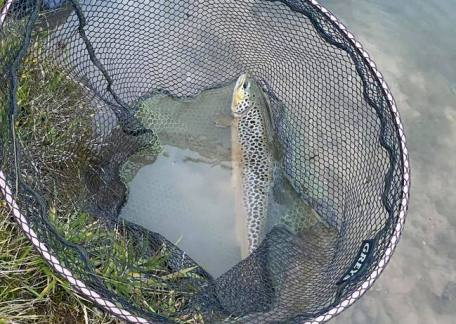 Richard Clark landed this magnificent Brownie on Coe Crag, caught using a CDC